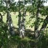 Фото объявления - Продаю участок земли 20 соток, в поселке Курумоч самарской области