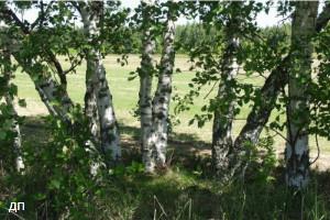 Продам земельный участок в поселке Курумоч, самарской области фото