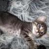 Фото объявления - Отдам в дар красивых маленьких котят