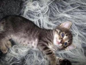 Объявление с фото - отдам даром котят