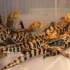 Фото объявления - Продажа рептилий в Самаре