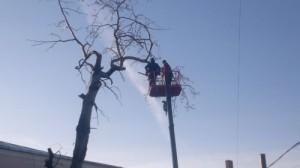 Фото спил деревьев в Самаре